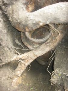 Tree crushes sewer